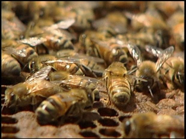Bees (File Photo)