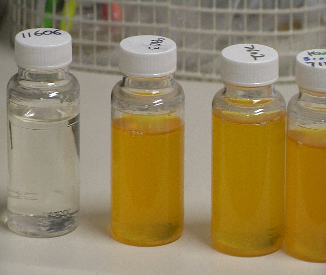 Clean water vs. water with coliform (yellow)