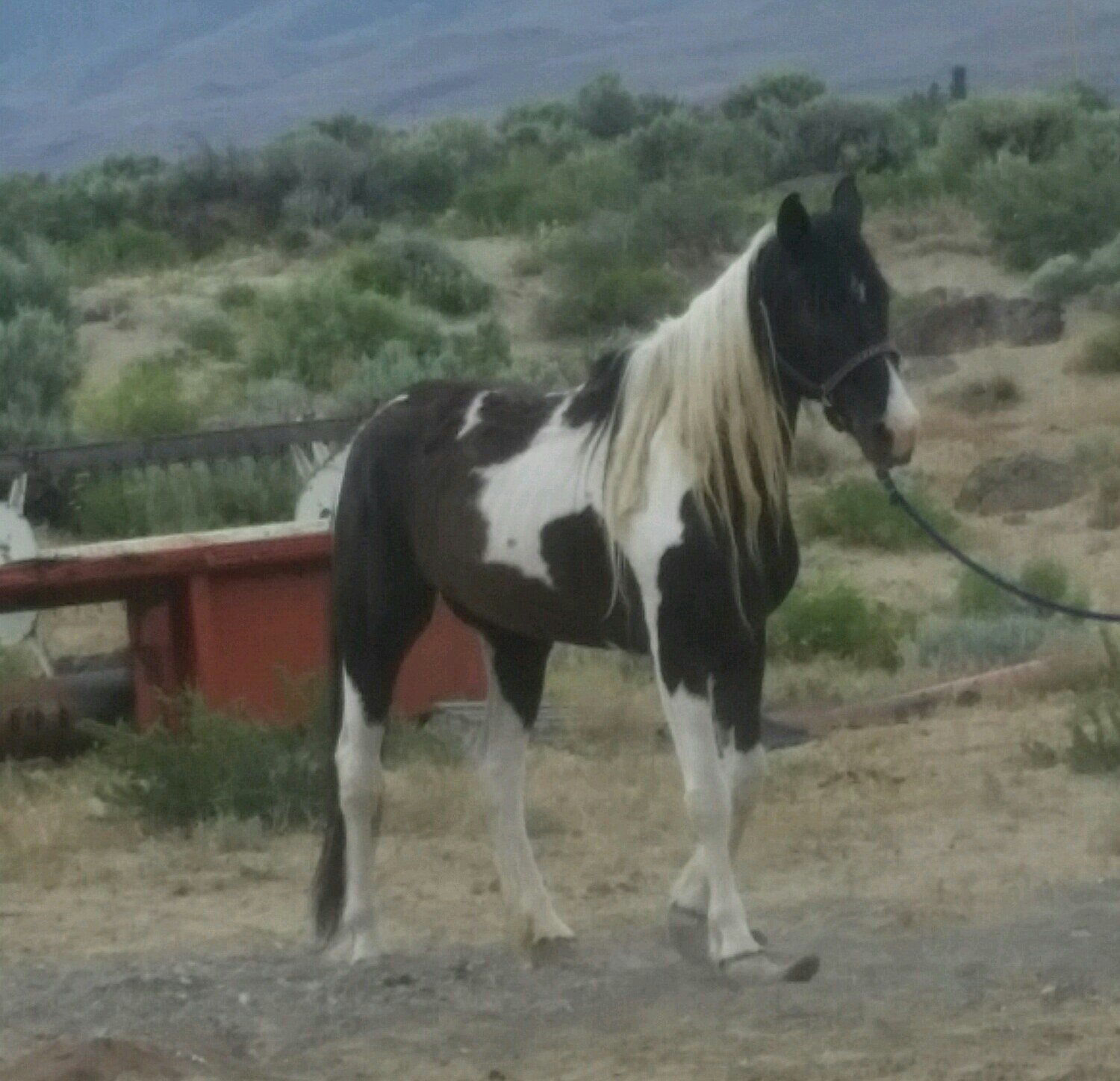 Misty is the only horse CEOCW has been able to save through the owner's written consent. One of their other horses ran away before volunteers arrived. The third, did not make it.