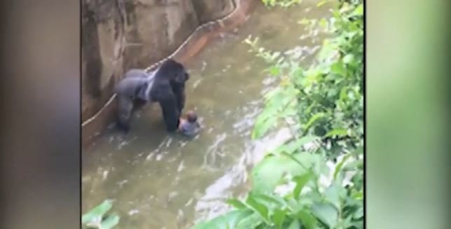 Cincinnati Zoo where child fell into a moat