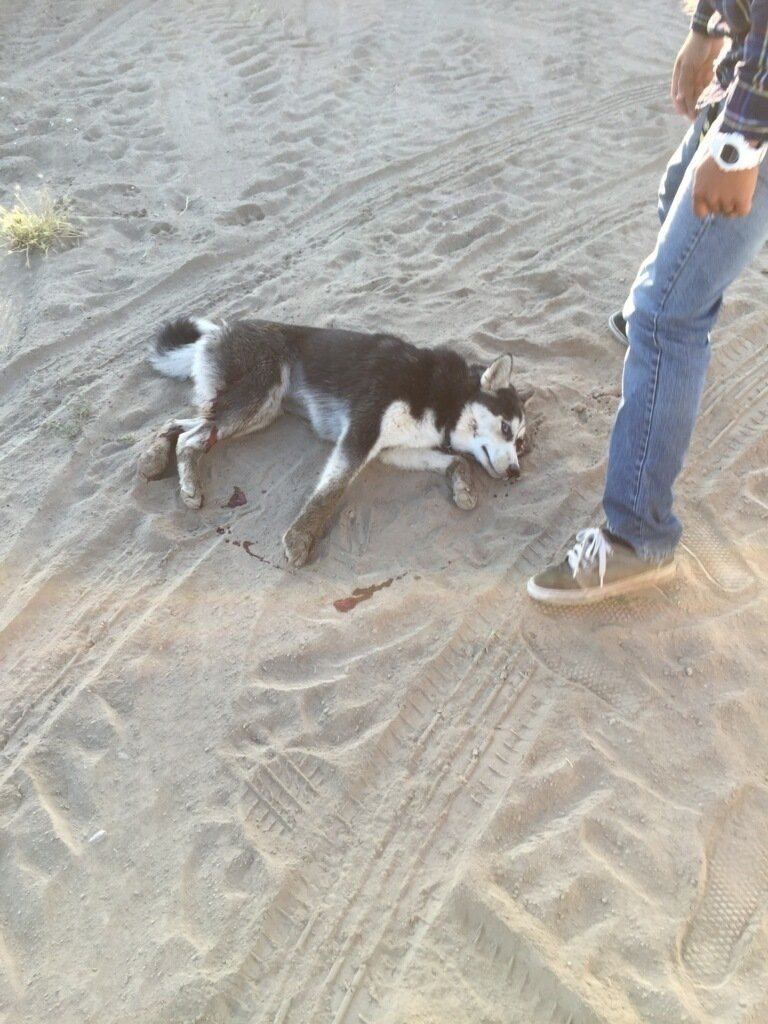 Family outraged after neighbor shoots and kills puppy nbc right pasco wa one family says thursday was a nightmare after their neighbor allegedly shot their dog theyre asking was it necessary solutioingenieria Image collections