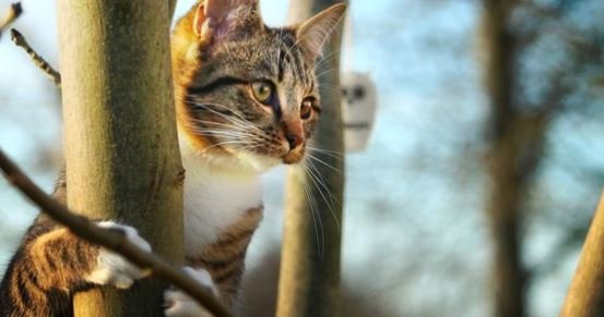 Other great resources for information on feral cats are Tri-Cities TNR on Facebook and Pet Over Population Prevention.