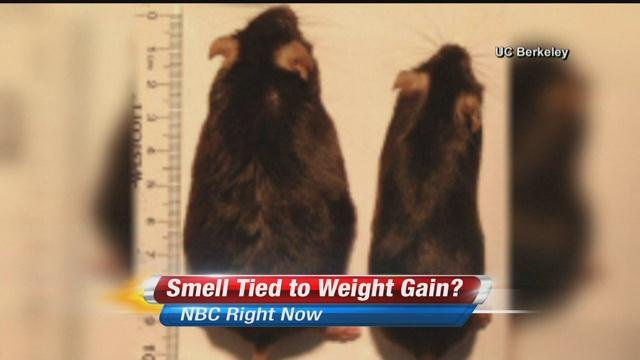 No sense of smell can lead to weight loss