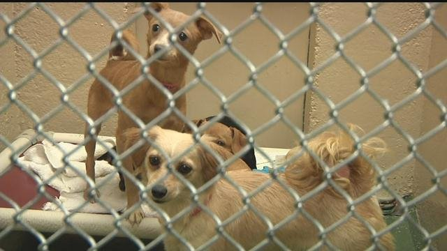 More animals relocated to Quincy for adoption