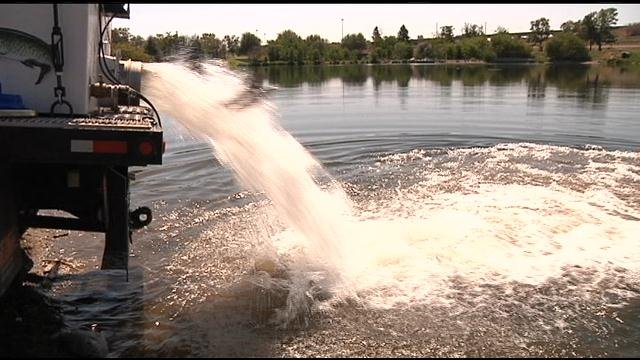 Kennewick pond stocked for kids fishing day nbc right for Stocked fishing ponds
