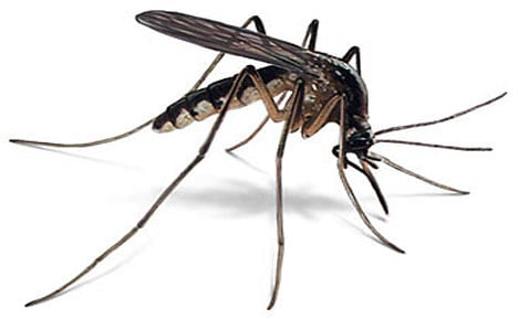 West nile virus found in mosquitoes in franklin county - Public swimming pools tri cities wa ...