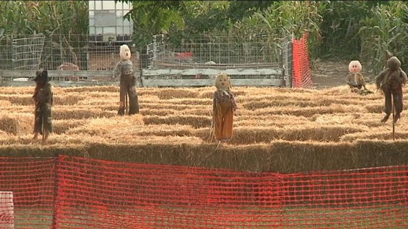 Union gap corn maze bigger and better nbc right now kndo for Betterall motors yakima wa