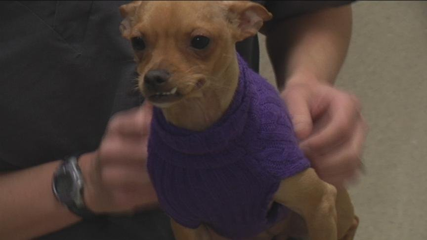 Temperatures are dropping across the region and pet owners should keep a few things in mind as we prepare for winter.