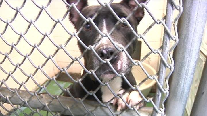 The Tri-Cities Animal Shelter in Pasco is offering free adoptions for the first 40 pets to get adopted.