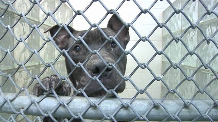 If you live in the cities of Richland and Pasco, you have to pay a fee to have your dog licensed every year. NBC Right Now did some digging to find out where that money goes.