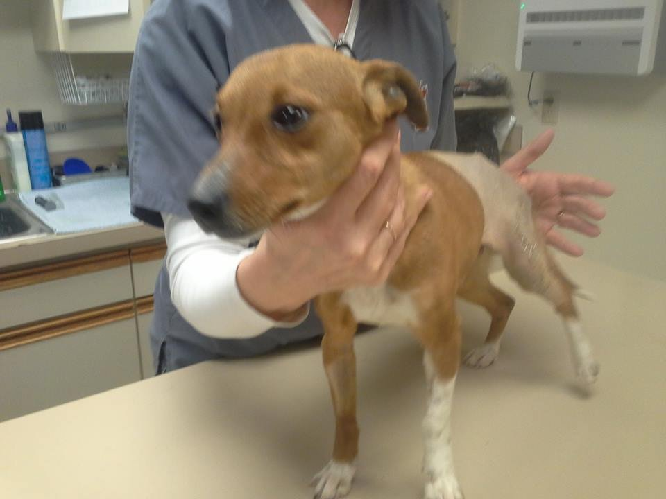 An abandoned and abused dog is recovering tonight thanks to some Good Samaritans in Yakima.