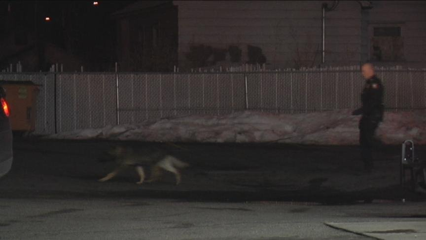 A Yakima police dog is being hailed as a hero Monday after chasing down a convenience store robber Sunday night. T