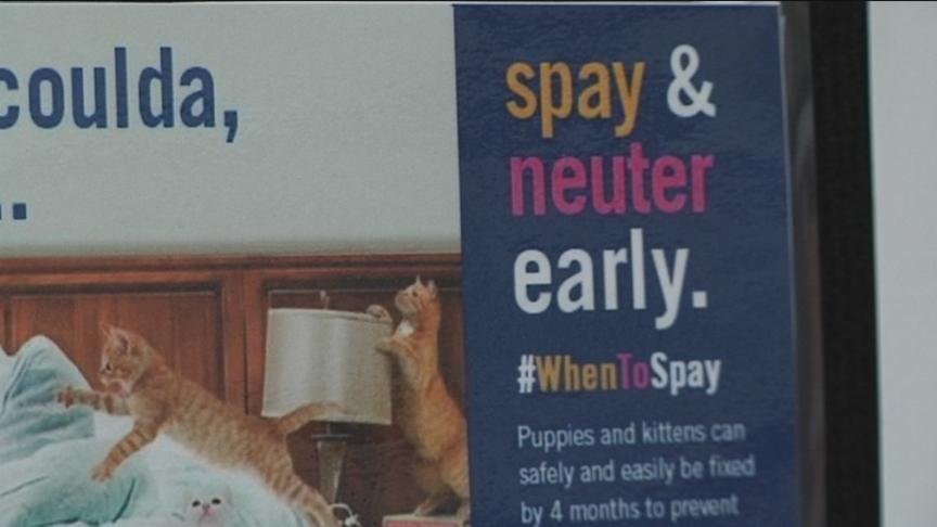 It is national spay and neuter month and staff at the Yakima Humane Society said you want to get your pet fixed earlier than you think.