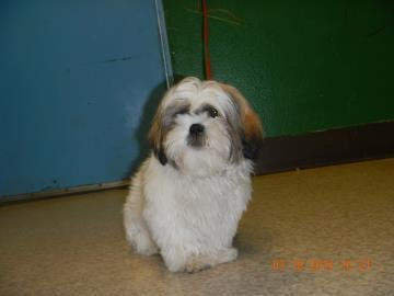 Tri-City Animal Control is looking for a puppy, and the person who stole him from the shelter.