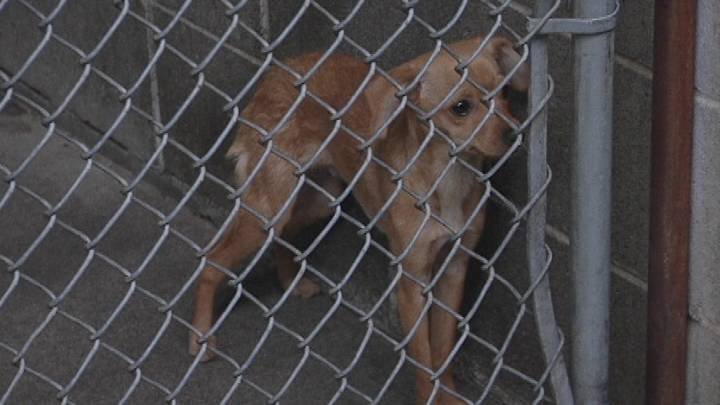 Tri-Cities Animal Control took in two dogs this past week that were just tossed away in dumpsters.