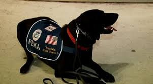 More dogs from search and rescue teams are joining join the search for victims of the Oso mudslide today.