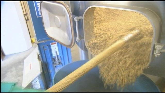 Spent grains, a by-product of beer brewing, usually ends up in a trough for cattle, but if the FDA gets their way - it could end up in a landfill.