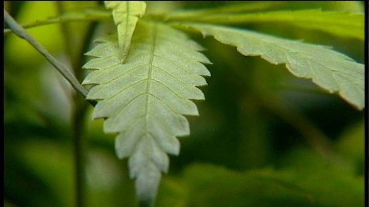 The lottery system chosen by Washington State to limit the number of pot retail licenses began Monday.