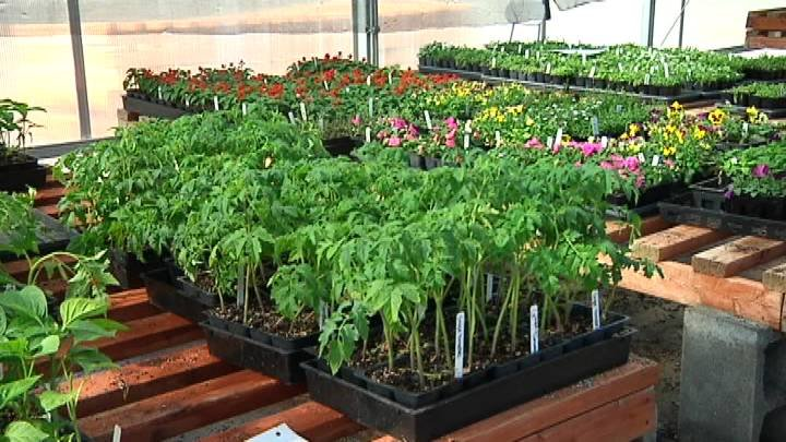 While Bloomsday isn't until Sunday, flowers in our region are already blooming and are for sale at several FFA fundraisers this weekend.