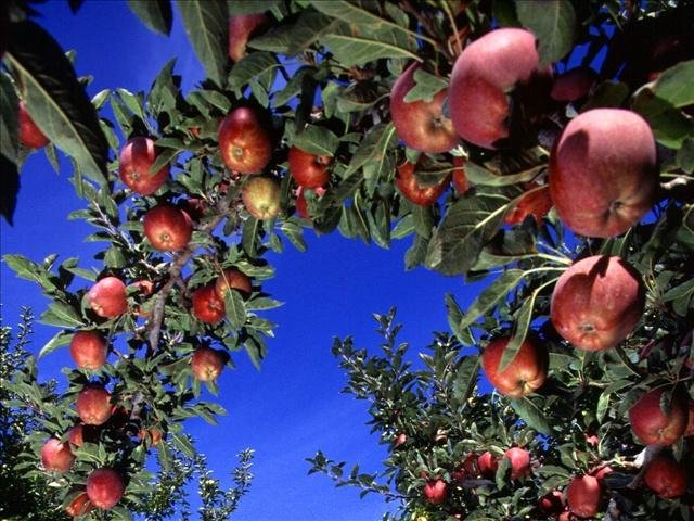 A sudden spike in pesticide-related illnesses is worrying Washington state health officials.