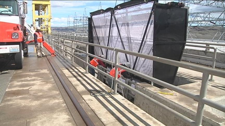 Efforts to drive fish around the Priest Rapids and Wanapum dams on the Columbia River have been suspended after a study found dam modifications for migrating adult salmon were working.