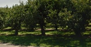 A cherry grower near Granger is using a state program to house migrant farmworkers in tents.