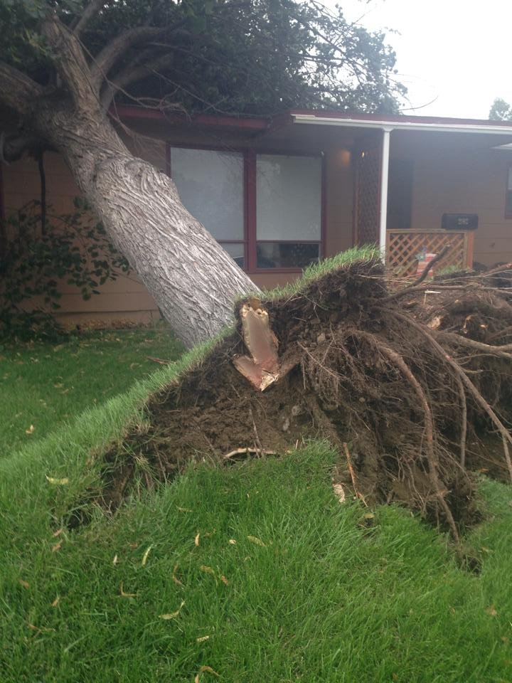 Severe thunderstorms on Tuesday uprooted this large tree in North Richland. COURTESY: Aimee Marie Fournier-Plante