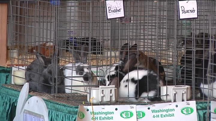 The 4-H Club had a Rabbit Barn at the fair.
