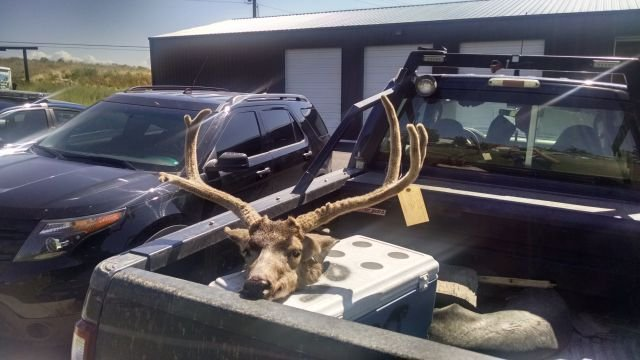 5 people face charges for unlawfully killing a mule deer near Pendleton