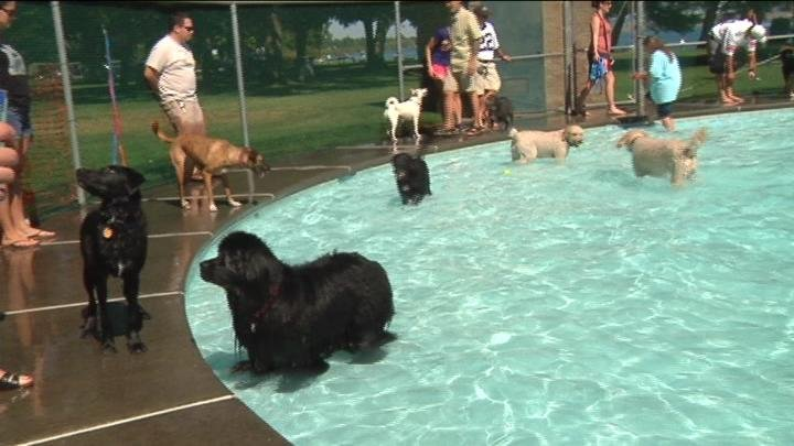 Dogs enjoyed the water before the pool closed for the season.