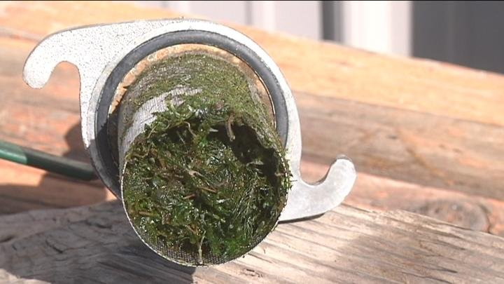 Clogged filters are causing some residents' grass to die.