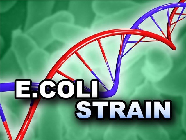 Investigators are looking for the sources of fatal strains of E. coli that killed a 4-year-old girl in Oregon and a 3-year-old girl in Washington, and left a 5-year-old boy from Washington fighting for his life.