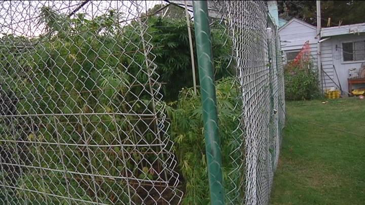 A local medical marijuana grower has been burglarized.