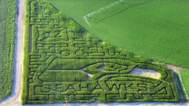 If you're in the mood for some Seahawks fun or you just want to get lost for a little while there's a big Seahawks maze out at the Middleton Fall Festival.