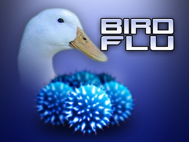 Our local eggs aren't going to China. After confirmed cases of bird flu were found in Benton County recently nearly 30 nations will restrict American poultry.
