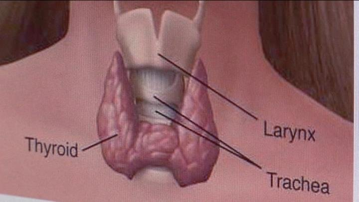 Doctors said the thyroid helps regulate weight, appetite, and overall wellness.