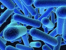 Listeria Monocytogenes is a bacterium you do not want to come in contact with, and we are getting a better idea of the outbreak that happened in Washington State at the end of last year.