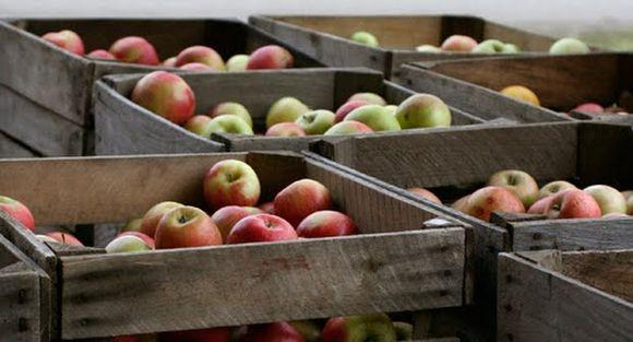 Ports return to normal; Washington apple exports pick up