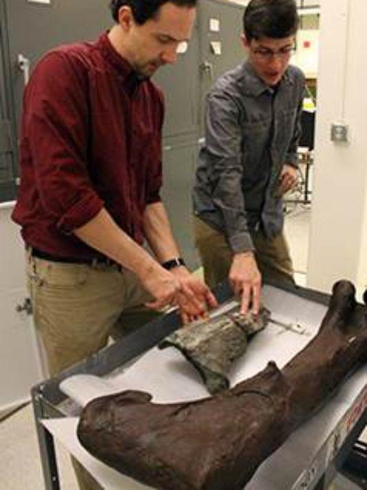 First Dinosaur Fossil Found in Washington State