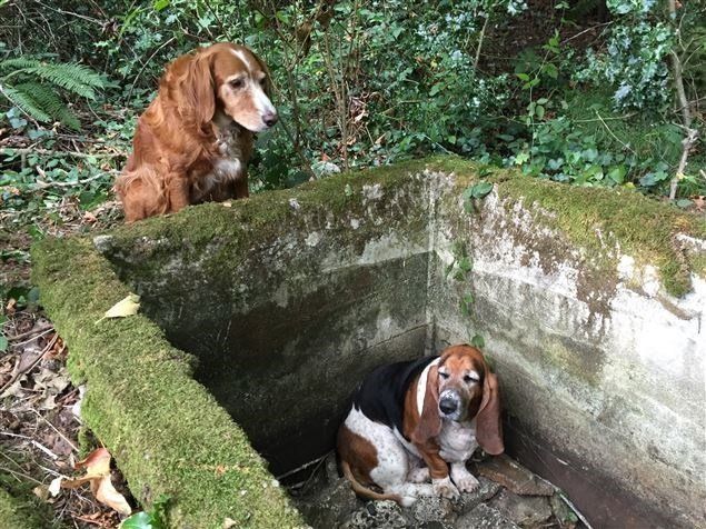 Washington governor gives award to dog who protected friend.
