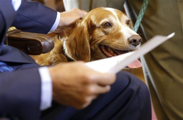 Washington governor gives award to dog who protected friend