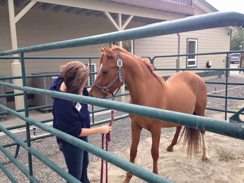 18 horses were gelded at the clinic.