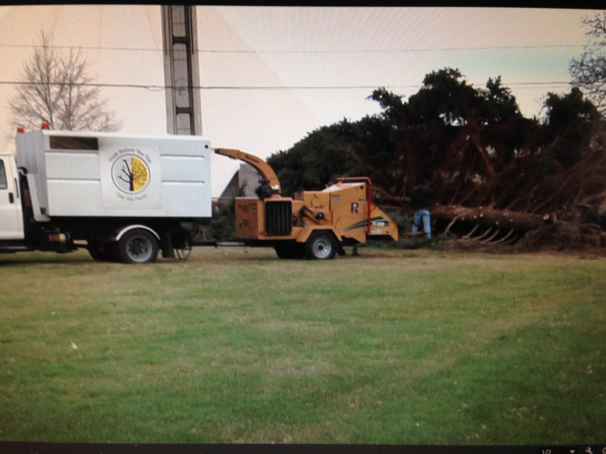 Richland tree clean up after windstorm.