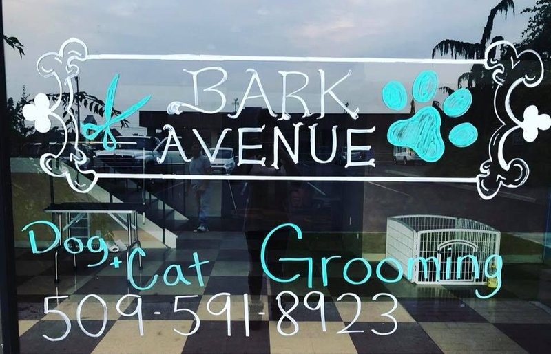 Business spotlight bark avenue nbc right now kndo kndu for Betterall motors yakima wa